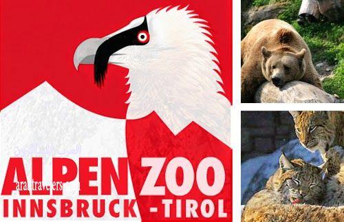 جولة مصورة فى حديقة الحيوان ألبين زو في إنسبروك