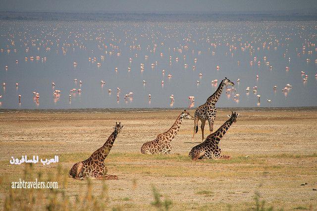 أكثر المناطق التي تجذب السياح في تنزانيا Tanzania 2015