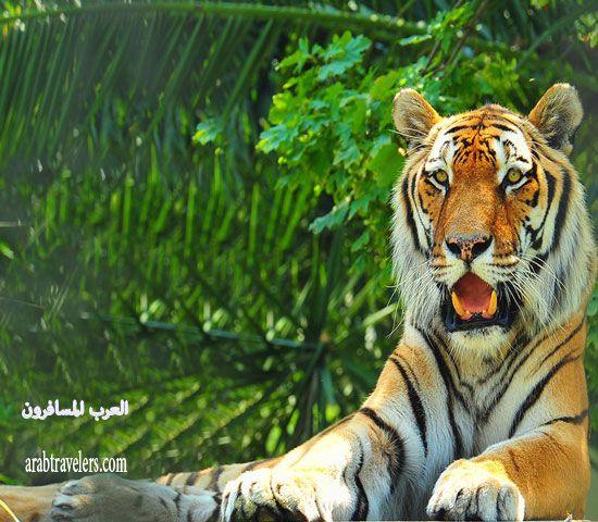 حديقة الحيوان الرائعة في اسطنبول