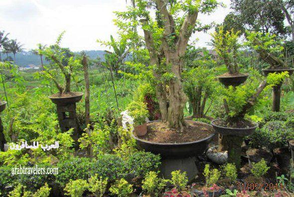 رحلة بالتفصيل لبلاد الجمال الفاتن والطل اندونيسيا
