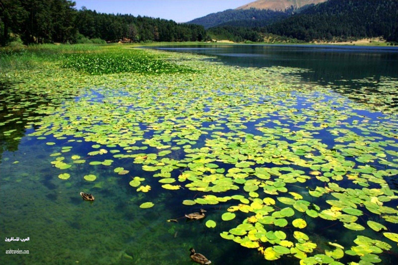 بحيرة أبانت من أجمل البحيرات الطبيعية في العالم