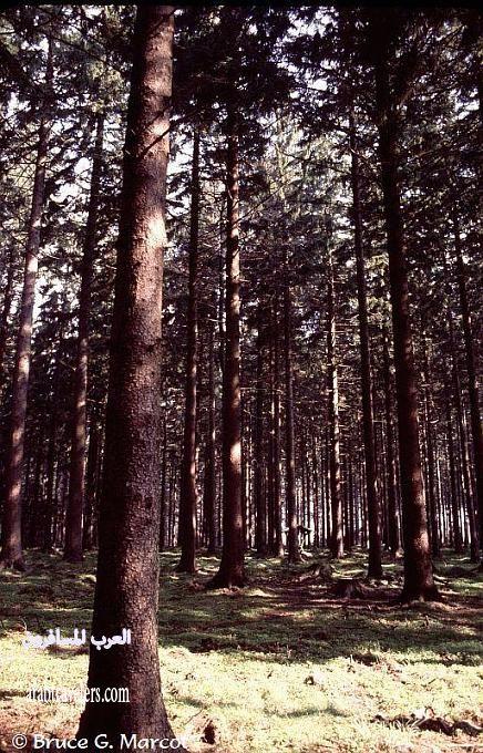 المانيا والغابة السوداء