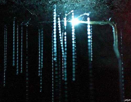 glowworm1.jpg