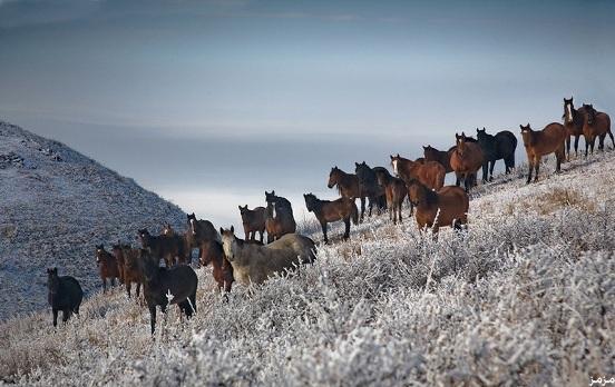 مدينة التفاح في كازاخستان 123016 المسافرون العرب