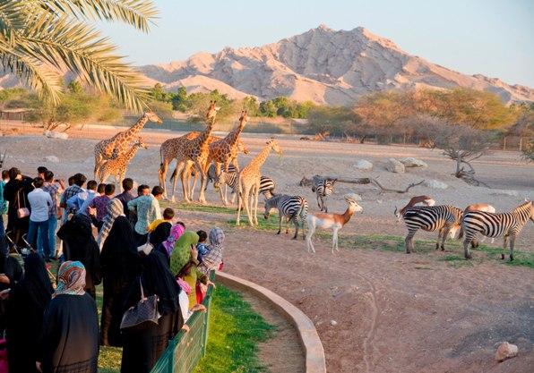126266 المسافرون العرب معالم الجذب السياحي في العين
