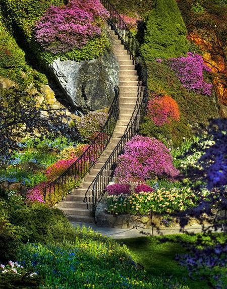حدائق بوتشاآرت فى كندا ( صور رائعة ) 178104 المسافرون العرب