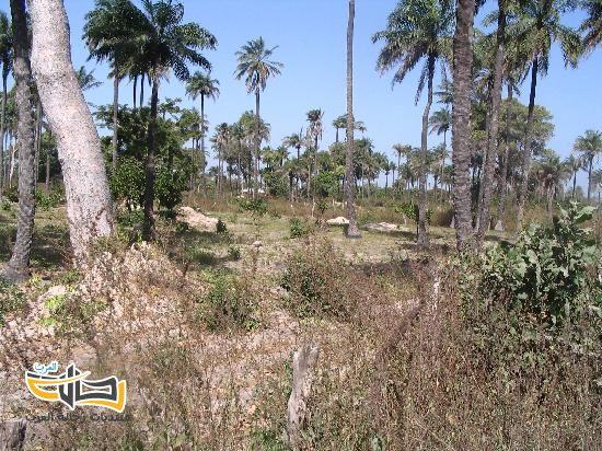 26218 المسافرون العرب معلومات وجولة سياحية الى جمهورية جامبيا الافريقية
