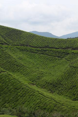 arab_travelers_malaysia_1386823879_859.jpg