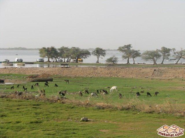 33354 المسافرون العرب رحلة صيد في السودان مدينة الدامر