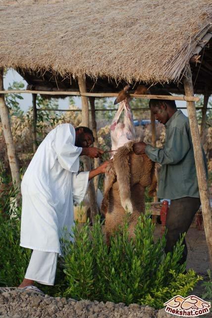 33359 المسافرون العرب رحلة صيد في السودان مدينة الدامر
