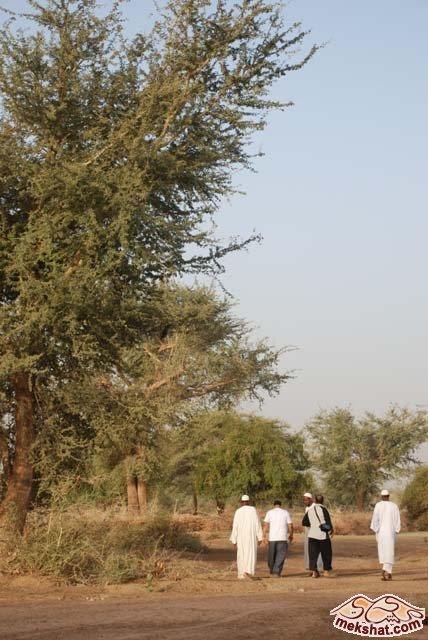 33375 المسافرون العرب رحلة صيد في السودان مدينة الدامر