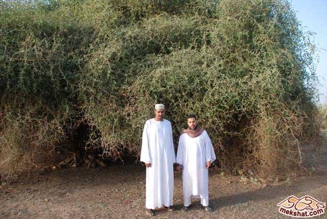 33376 المسافرون العرب رحلة صيد في السودان مدينة الدامر