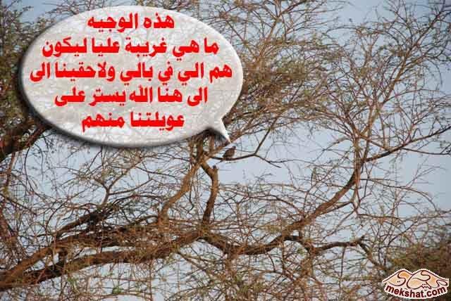 33377 المسافرون العرب رحلة صيد في السودان مدينة الدامر