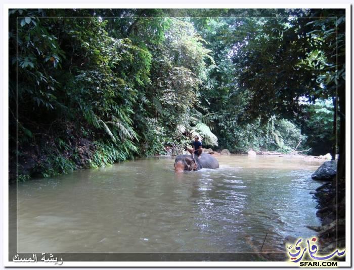 38574 المسافرون العرب تقرير رحلتى الي تايلاند بالصور - السياحة فى تايلاند