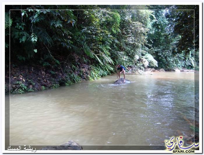 38575 المسافرون العرب تقرير رحلتى الي تايلاند بالصور - السياحة فى تايلاند