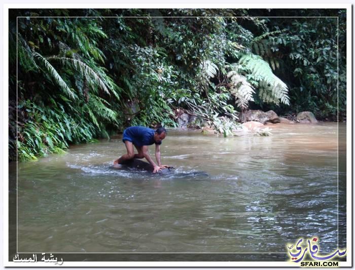 38576 المسافرون العرب تقرير رحلتى الي تايلاند بالصور - السياحة فى تايلاند