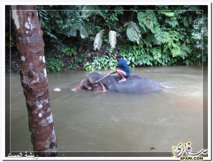 38577 المسافرون العرب تقرير رحلتى الي تايلاند بالصور - السياحة فى تايلاند