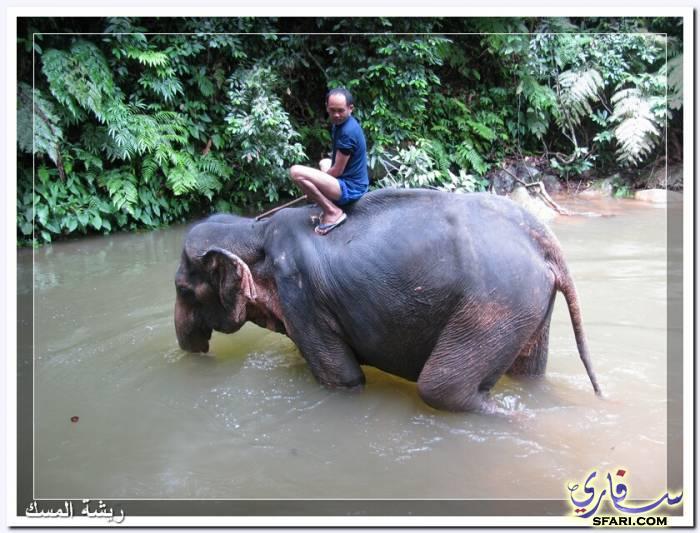 38578 المسافرون العرب تقرير رحلتى الي تايلاند بالصور - السياحة فى تايلاند