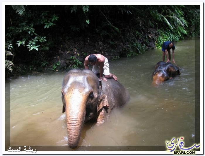 38579 المسافرون العرب تقرير رحلتى الي تايلاند بالصور - السياحة فى تايلاند