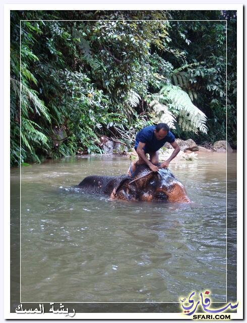 38581 المسافرون العرب تقرير رحلتى الي تايلاند بالصور - السياحة فى تايلاند
