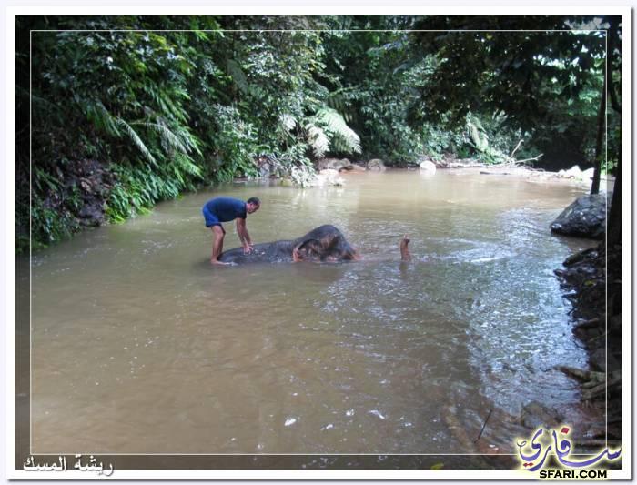 38582 المسافرون العرب تقرير رحلتى الي تايلاند بالصور - السياحة فى تايلاند