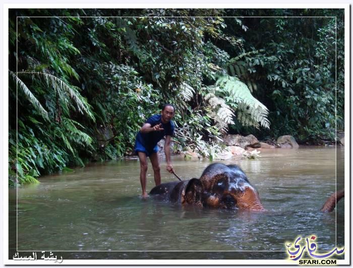38583 المسافرون العرب تقرير رحلتى الي تايلاند بالصور - السياحة فى تايلاند