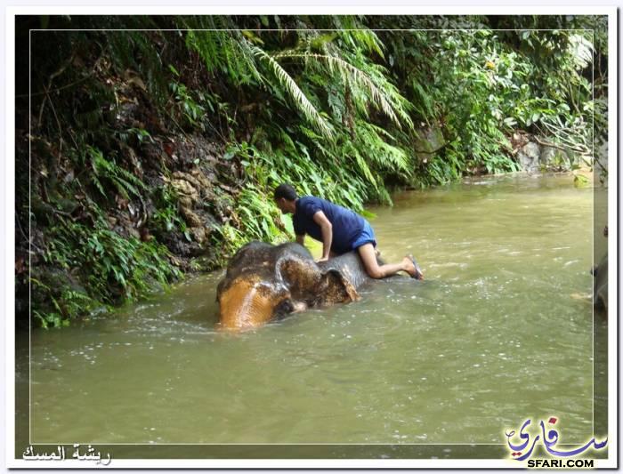 38584 المسافرون العرب تقرير رحلتى الي تايلاند بالصور - السياحة فى تايلاند