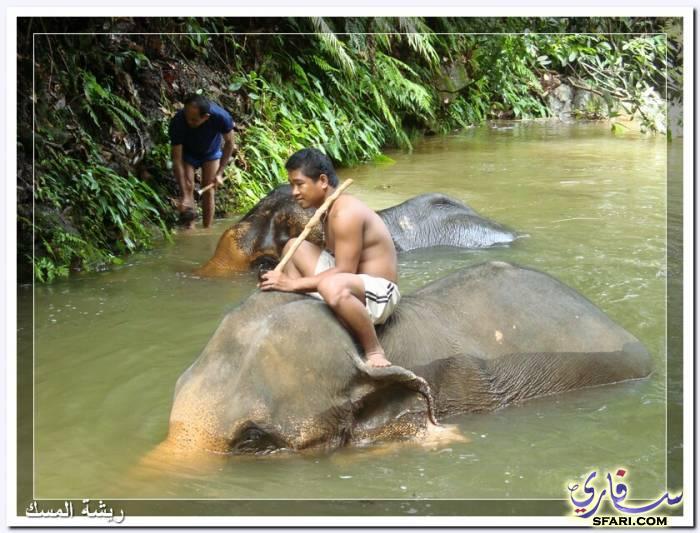 38585 المسافرون العرب تقرير رحلتى الي تايلاند بالصور - السياحة فى تايلاند