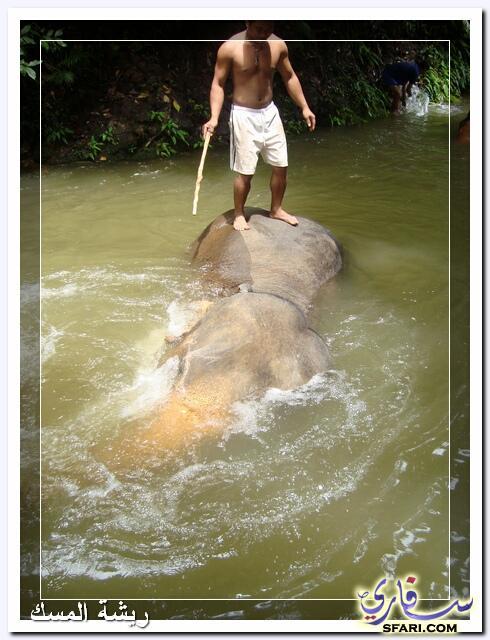 38586 المسافرون العرب تقرير رحلتى الي تايلاند بالصور - السياحة فى تايلاند