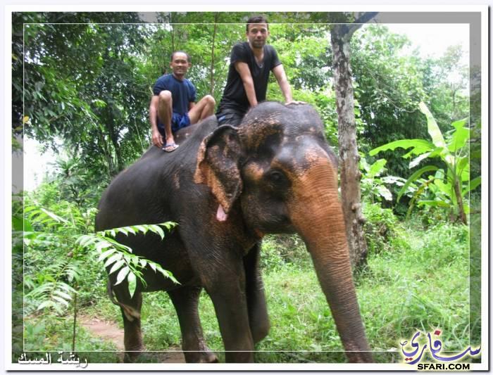 38587 المسافرون العرب تقرير رحلتى الي تايلاند بالصور - السياحة فى تايلاند