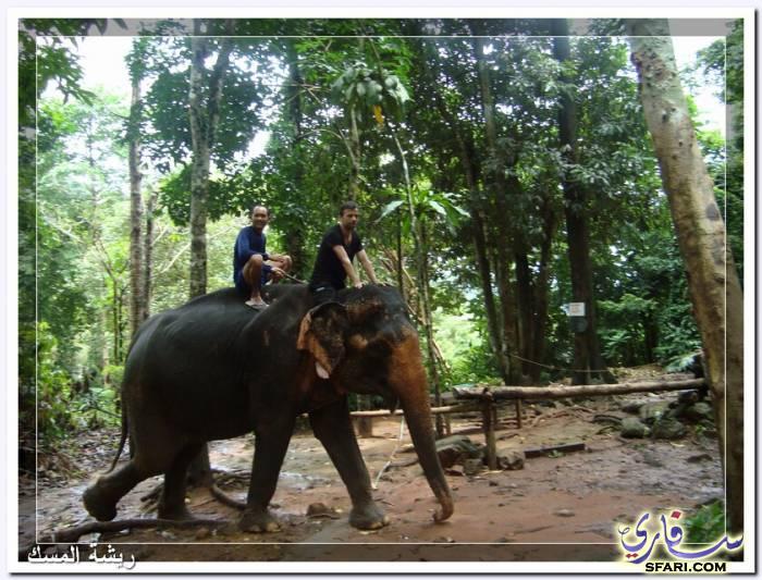 38588 المسافرون العرب تقرير رحلتى الي تايلاند بالصور - السياحة فى تايلاند
