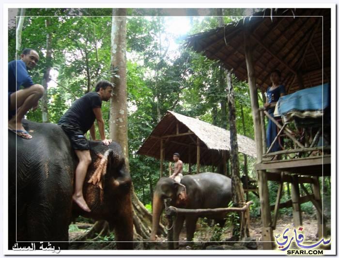 38589 المسافرون العرب تقرير رحلتى الي تايلاند بالصور - السياحة فى تايلاند