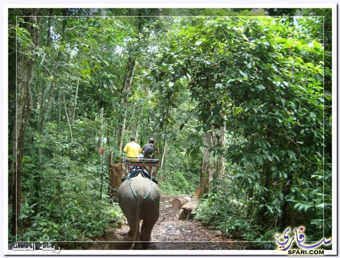 38591 المسافرون العرب تقرير رحلتى الي تايلاند بالصور - السياحة فى تايلاند