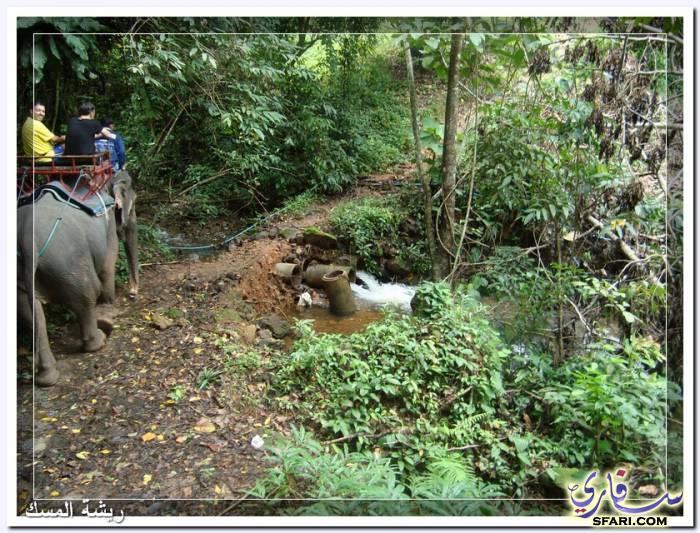 38592 المسافرون العرب تقرير رحلتى الي تايلاند بالصور - السياحة فى تايلاند