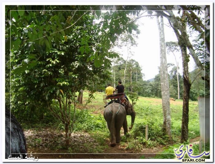 38596 المسافرون العرب تقرير رحلتى الي تايلاند بالصور - السياحة فى تايلاند