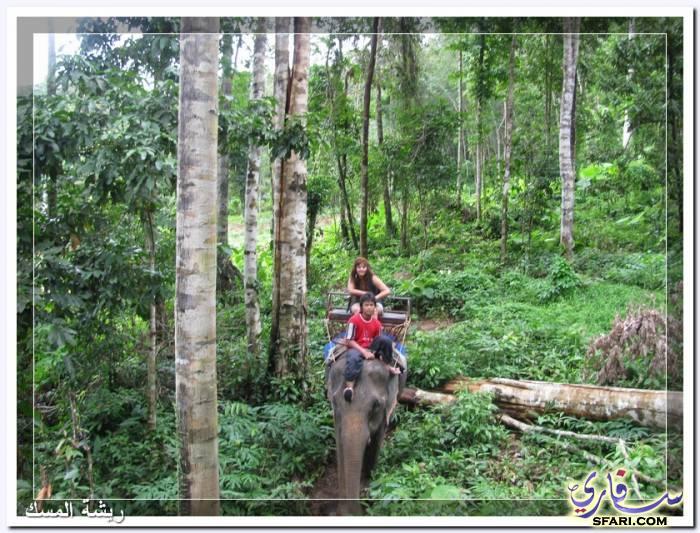 38601 المسافرون العرب تقرير رحلتى الي تايلاند بالصور - السياحة فى تايلاند