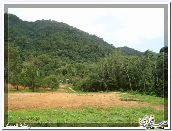 38602 المسافرون العرب تقرير رحلتى الي تايلاند بالصور - السياحة فى تايلاند