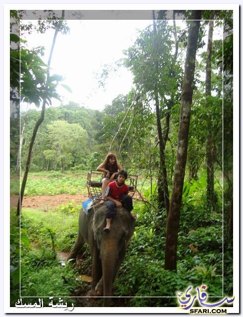 38603 المسافرون العرب تقرير رحلتى الي تايلاند بالصور - السياحة فى تايلاند