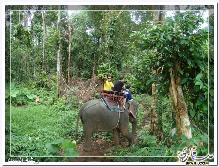38604 المسافرون العرب تقرير رحلتى الي تايلاند بالصور - السياحة فى تايلاند