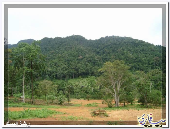 38605 المسافرون العرب تقرير رحلتى الي تايلاند بالصور - السياحة فى تايلاند