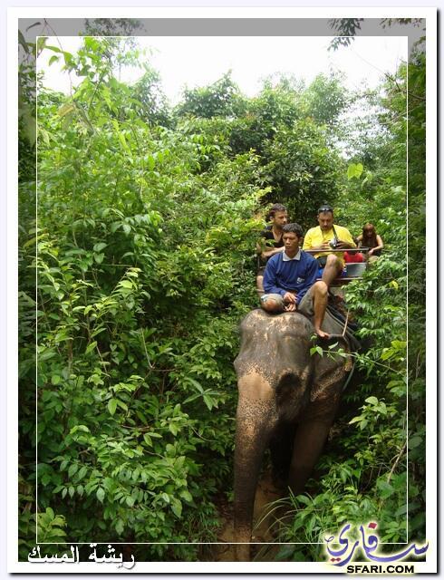 38607 المسافرون العرب تقرير رحلتى الي تايلاند بالصور - السياحة فى تايلاند