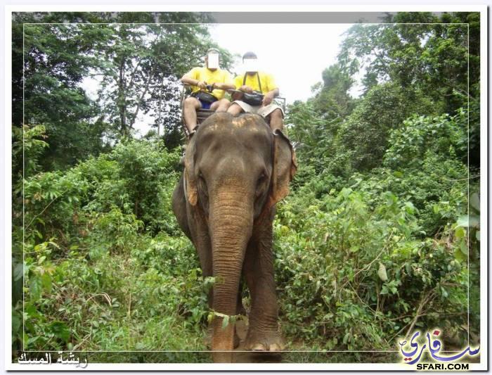 38608 المسافرون العرب تقرير رحلتى الي تايلاند بالصور - السياحة فى تايلاند
