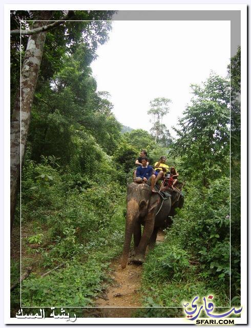 38611 المسافرون العرب تقرير رحلتى الي تايلاند بالصور - السياحة فى تايلاند