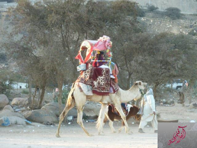 مرتفعات الشفا 399702 المسافرون العرب
