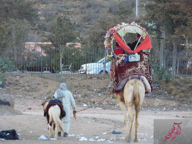 مرتفعات الشفا 399703 المسافرون العرب
