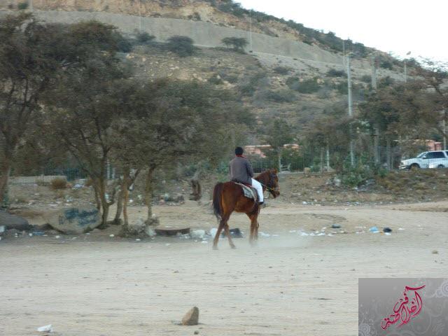 مرتفعات الشفا 399704 المسافرون العرب