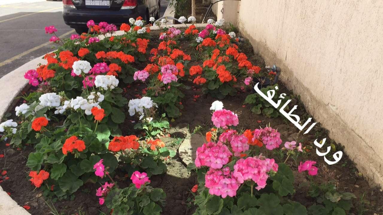 عروس المصائف الطائف 399927 المسافرون العرب