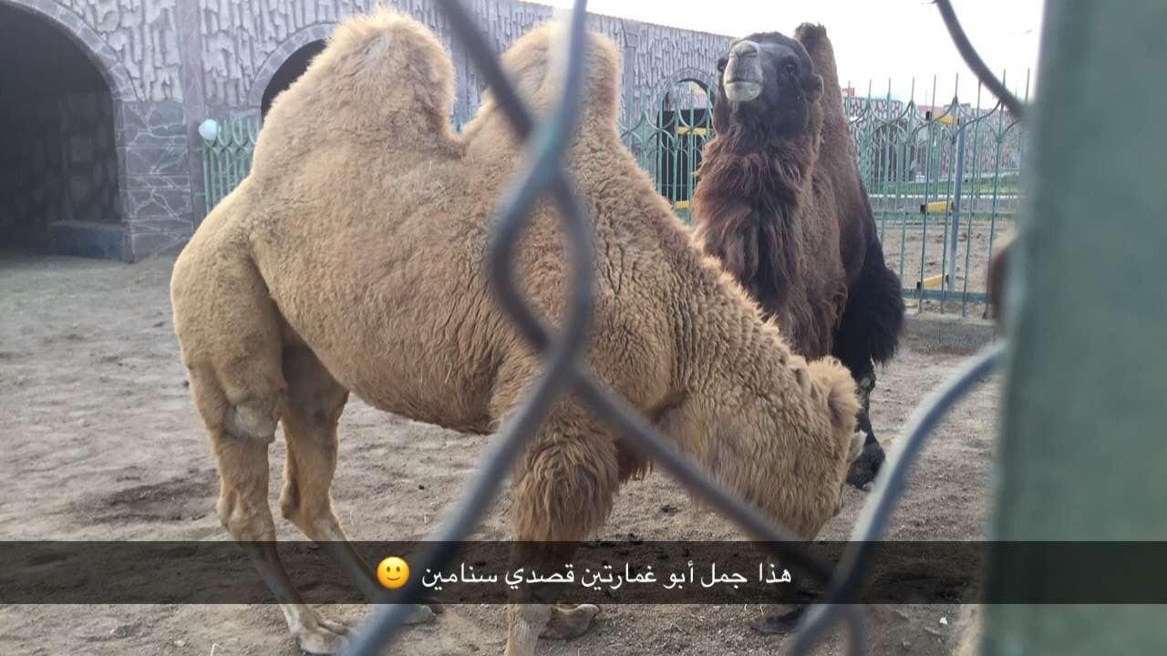 عروس المصائف الطائف 399943 المسافرون العرب