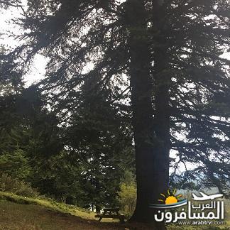 arabtrvl1504081083411.jpg