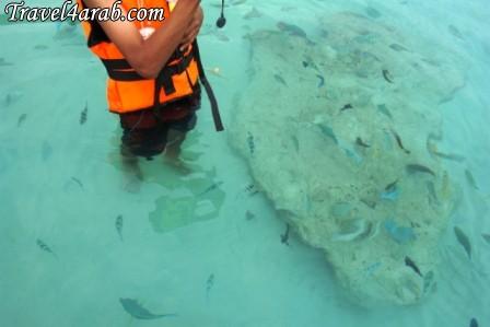 453906 المسافرون العرب جزيرة تيومان عالم تحت الماء